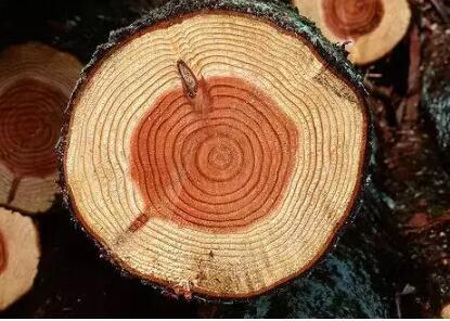 新中式家具木材烘干有什么讲究?新中式家具木材烘干工艺技术